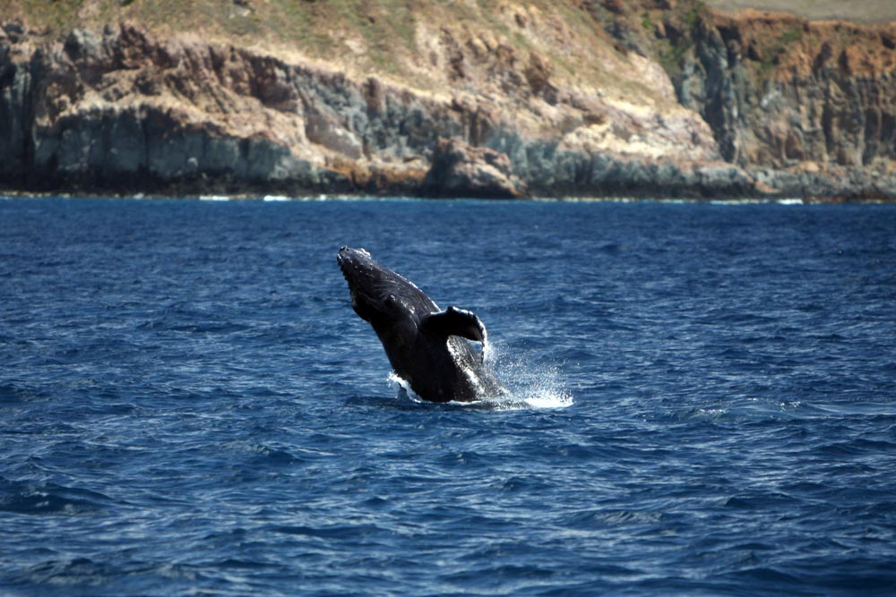 Island Trader Vacations Reviews Channel Islands National Park
