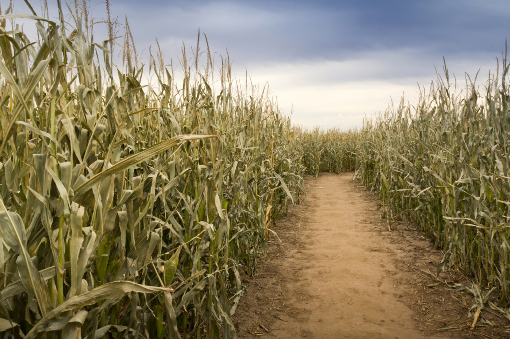 Island Trader Vacations Reveals 3 Great Corn Mazes in 2014